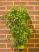 Polanter with herbs