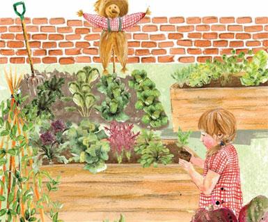 School Autumn/Winter Garden - Vegetable and Salad Plants