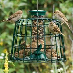 Guardian Seed Feeder