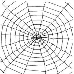 Window Webs