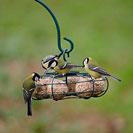 CJ Wildlife Hanging Star Fat Ball Bird Feeder