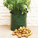 Potato Growing Kits