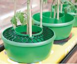 Plant Halo Grids - Set of 3